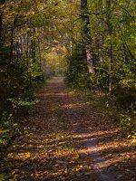 Verkiai · miškas, ruduo P1050842