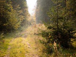 Verkiai · miškas, ruduo P1050873