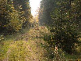 Verkiai · miškas, ruduo P1050874