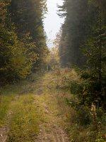 Verkiai · miškas, ruduo P1050875