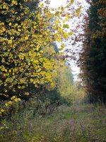Verkiai · miškas, ruduo P1050876