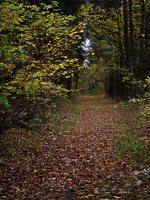 Verkiai · miškas, ruduo P1050886