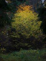 Verkiai · miškas, ruduo P1050887