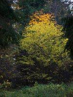 Verkiai · miškas, ruduo P1050888