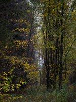 Verkiai · miškas, ruduo P1050889