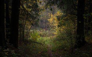 Verkiai · miškas, ruduo P1050894