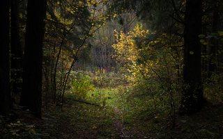 Verkiai · miškas, ruduo P1050895