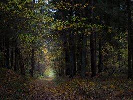 Verkiai · miškas, ruduo P1050896