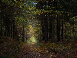 Verkiai · miškas, ruduo P1050897