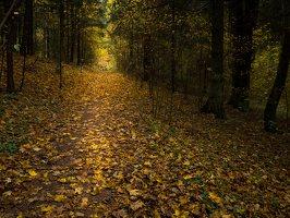 Verkiai · miškas, ruduo P1050898