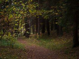 Verkiai · miškas, ruduo P1050899