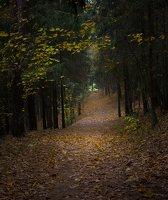 Verkiai · miškas, ruduo P1050900