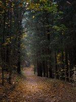Verkiai · miškas, ruduo P1050901