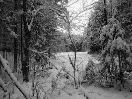 Verkiai · miškas, žiema P1180666