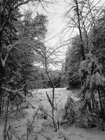 Verkiai · miškas, žiema P1180667