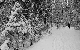 Verkiai · miškas, žiema P1180668