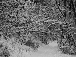 Verkiai · miškas, žiema P1180669