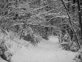 Verkiai · miškas, žiema P1180670