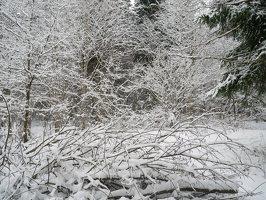 Verkiai · miškas, žiema P1180672