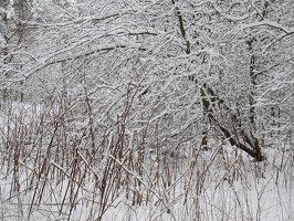 Verkiai · miškas, žiema P1180673