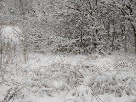 Verkiai · miškas, žiema P1180675