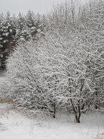 Verkiai · miškas, žiema P1180676