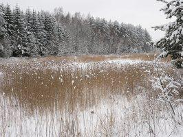 Verkiai · miškas, žiema P1180678