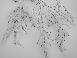 Verkiai · žiema P1180680