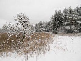 Verkiai · miškas, žiema P1180681
