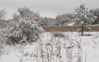 Verkiai · miškas, žiema P1180682