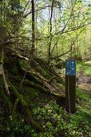Grabijolų pažintinis takas · Saldusis (Ilgojos) upelis 1418