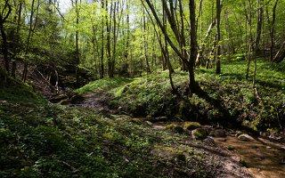 Grabijolų pažintinis takas · Saldusis (Ilgojos) upelis 1426