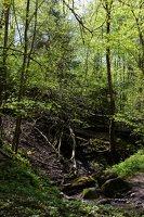 Grabijolų pažintinis takas · Saldusis (Ilgojos) upelis 1427