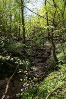 Grabijolų pažintinis takas · Saldusis (Ilgojos) upelis 1431