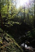 Grabijolų pažintinis takas · Saldusis (Ilgojos) upelis 1486