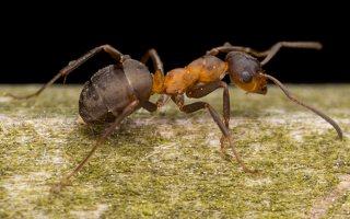 Formicidae · skruzdėlė 2826