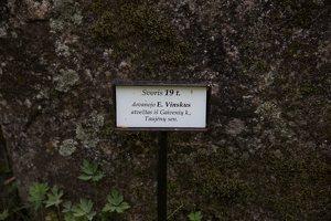 Taujėnų dvaras 4673 · parkas, akmuo