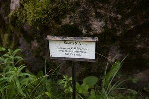 Taujėnų dvaras 4675 · parkas, akmuo