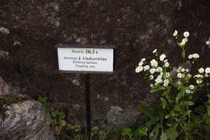 Taujėnų dvaras 4680 · parkas, akmuo