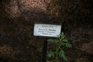 Taujėnų dvaras 4763 · parkas, akmuo