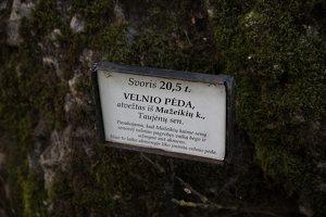 """Taujėnų dvaras 4764 · parkas, akmuo """"Velnio pėda"""""""