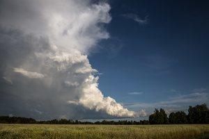 Šumskas · debesys virš grikių lauko 5430
