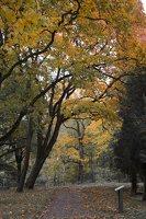 Lentvario dvaras · Andrė parkas, ruduo 6658