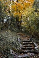 Lentvario dvaras · Andrė parkas, ruduo 6661