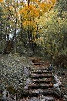 Lentvario dvaras · Andrė parkas, ruduo 6662