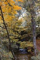 Lentvario dvaras · Andrė parkas, ruduo 6669