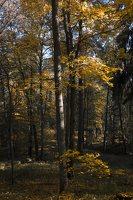 Verkiai · dvaro parkas, ruduo 6722