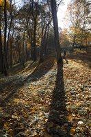 Verkiai · dvaro parkas, ruduo 6724
