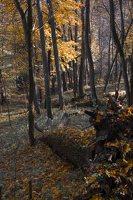 Verkiai · dvaro parkas, ruduo 6732