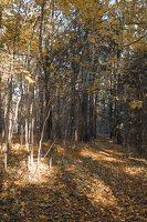 Verkiai · ruduo miške 6740